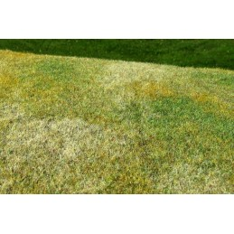MS-F003 Model Scene F003 grass mats standard (18x28cm).Cut Meadow - Late summer