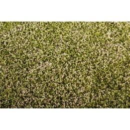 MS-F430 Model Scene F430 1/72 18X28cm.Clover blooming