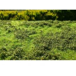 MS-F501 Model Scene F501 grass mats premium 18x28cm.Low bushes - Spring