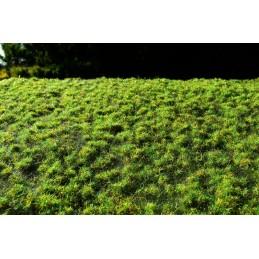 MS-F516 Model Scene F516 Small turfs - spring. 18x28 cm