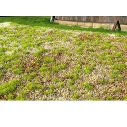 MS-F531 Model Scene F531 grass mats premium 18x28cm.Steppe spring